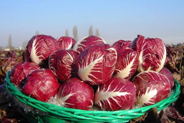 Photo of A Casaleone per la Fiera del Radicchio