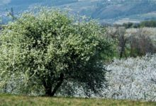 Photo of Percorsi in Valpolicella e Valdadige: Itinerario 12